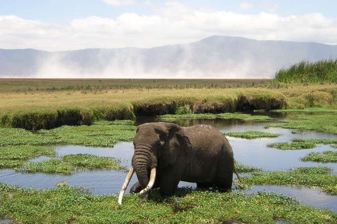 Safari tanzanie: découvrir la Ngorongoro Conservation Area