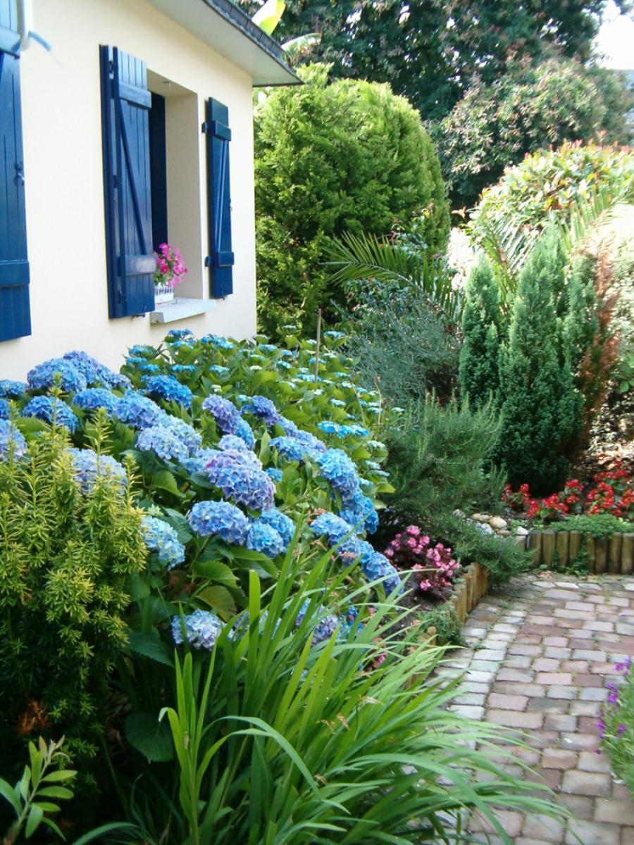 Comment avoir des hortensias bleus - Comment faire secher des hortensias ...